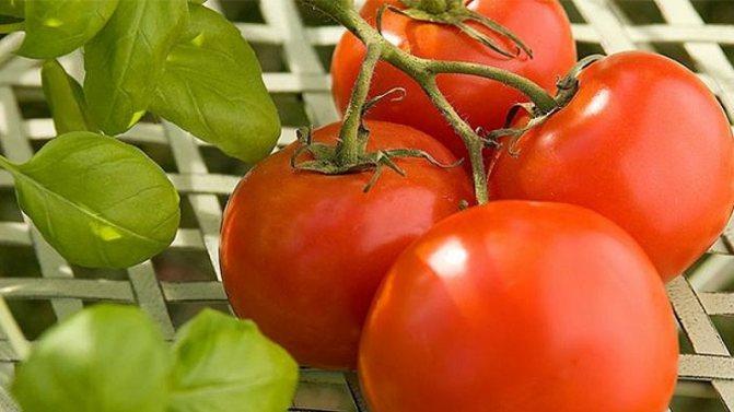 Томат марьина роща f1: отзывы, фото куста, урожайность и описание сорта
