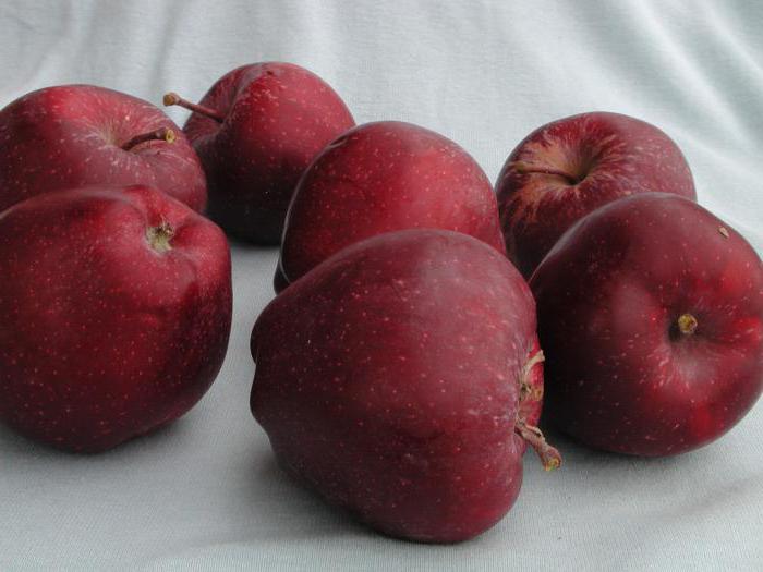 Яблоки ред чиф: описание и характеристики сорта, выращивание и уход с фото