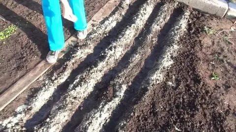 Как выращивать картофель в домашних условиях: посадка и уход в открытом грунте, традиционные и новые способы