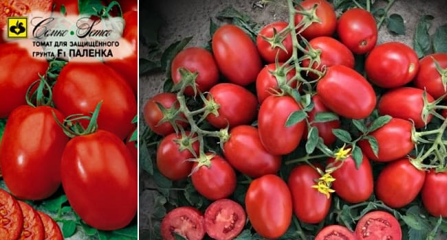 Описание и характеристики лучших индетерминантных сортов томатов для теплицы
