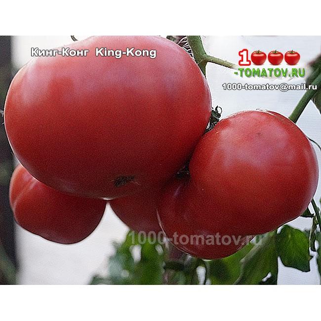 Томат p20+beauty king: описание сорта, отзывы, фото, урожайность | tomatland.ru