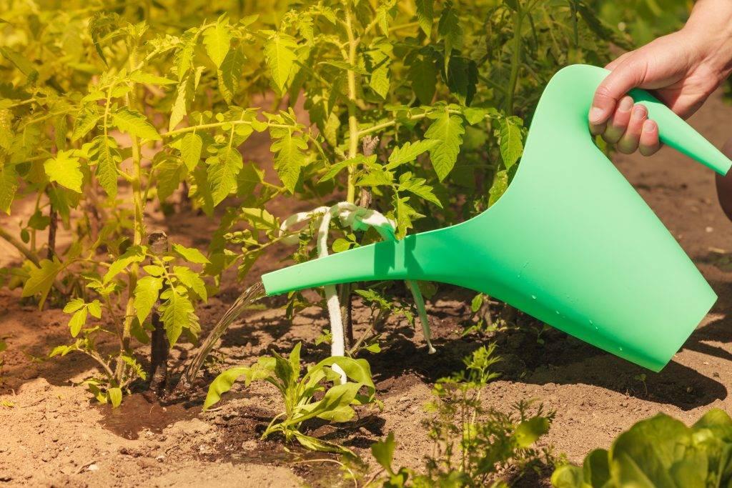 Как поливать тыкву: правила полива при выращивании овоща