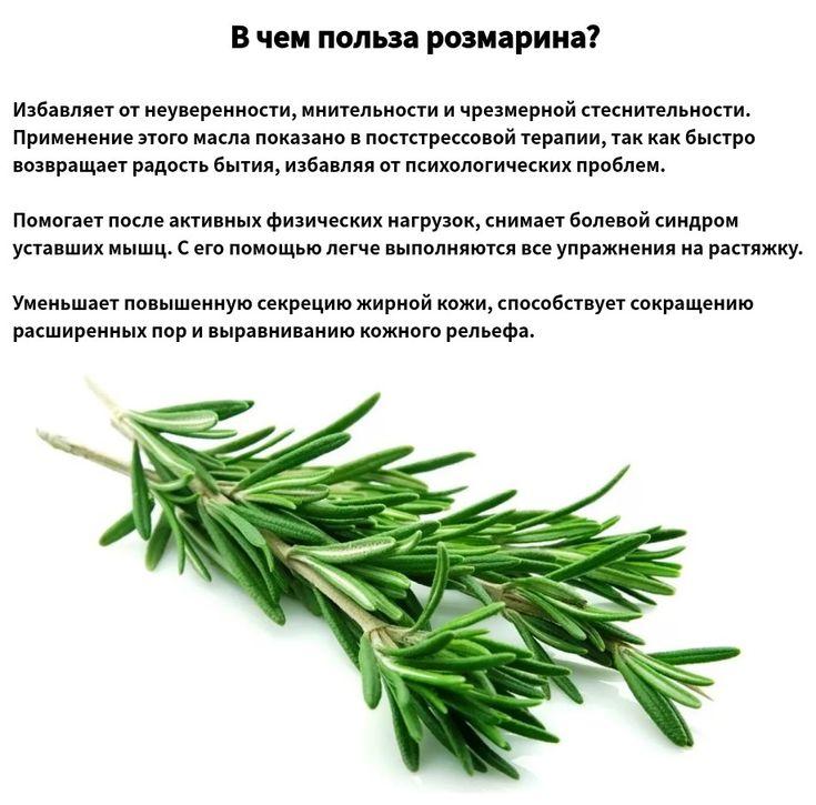 Розмарин: польза, вред и противопоказания | food and health