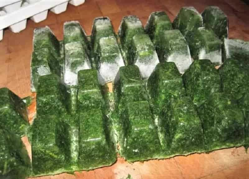 Заготовка шпината на зиму: заморозка и другие рецепты приготовления в домашних условиях