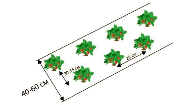 Агроволокно для клубники: схема посадки, как правильно выращивать, какой плотности нужен агрил