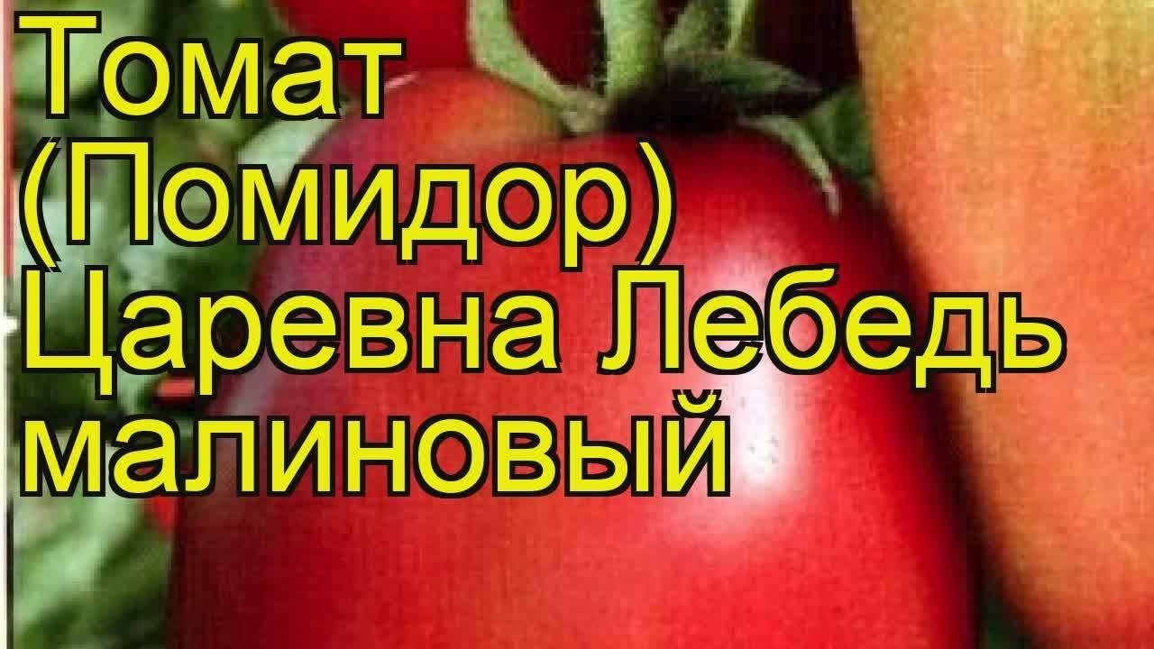 ✅ о томате царевна лебедь: правила посадки, ухода, выращивания, размножения - tehnomir32.ru