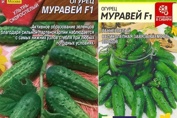 Огурцы бьерн f1: характеристика, правила выращивания, советы огородников