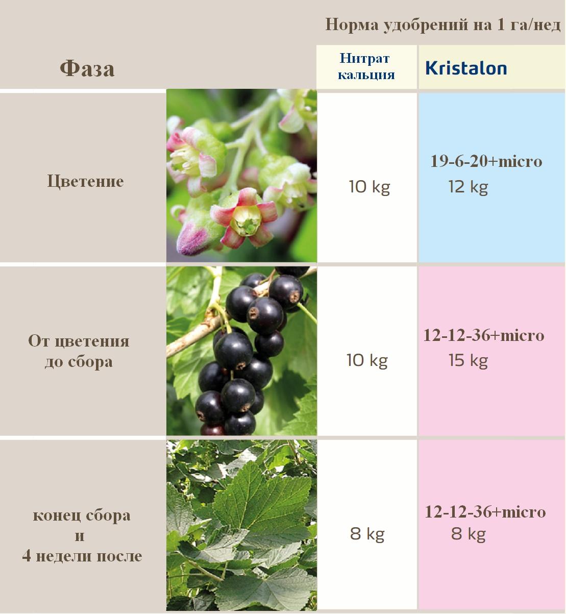 Чем подкормить смородину весной для хорошего урожая - самые лучшие удобрения