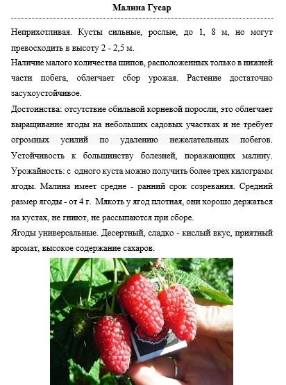 Выращивание малины сорта гусар: история выведения, описание, характеристика и особенности агротехники