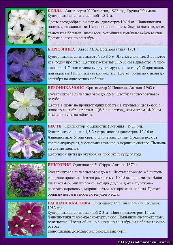 Клематисы сорта с фото и описанием. каталог с названием сортов