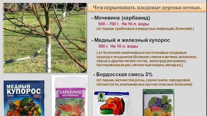 Железный купорос: применение в садоводстве и на огороде, как разводить для обработки сульфат железа, для винограда, деревьев, осенью