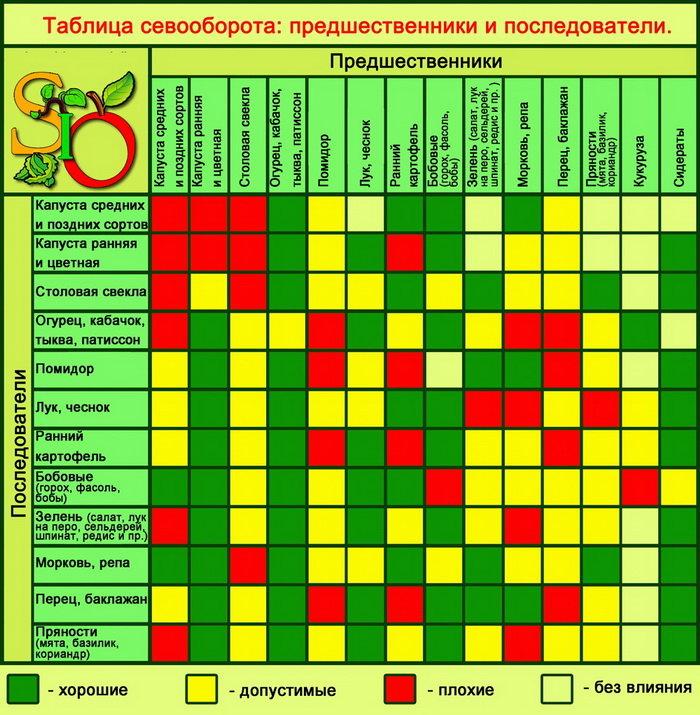 Что посадить после перца и томатов и с чем их можно совмещать