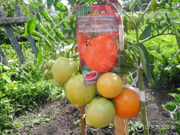 Томат обские купола f1: описание, отзывы, фото, урожайность