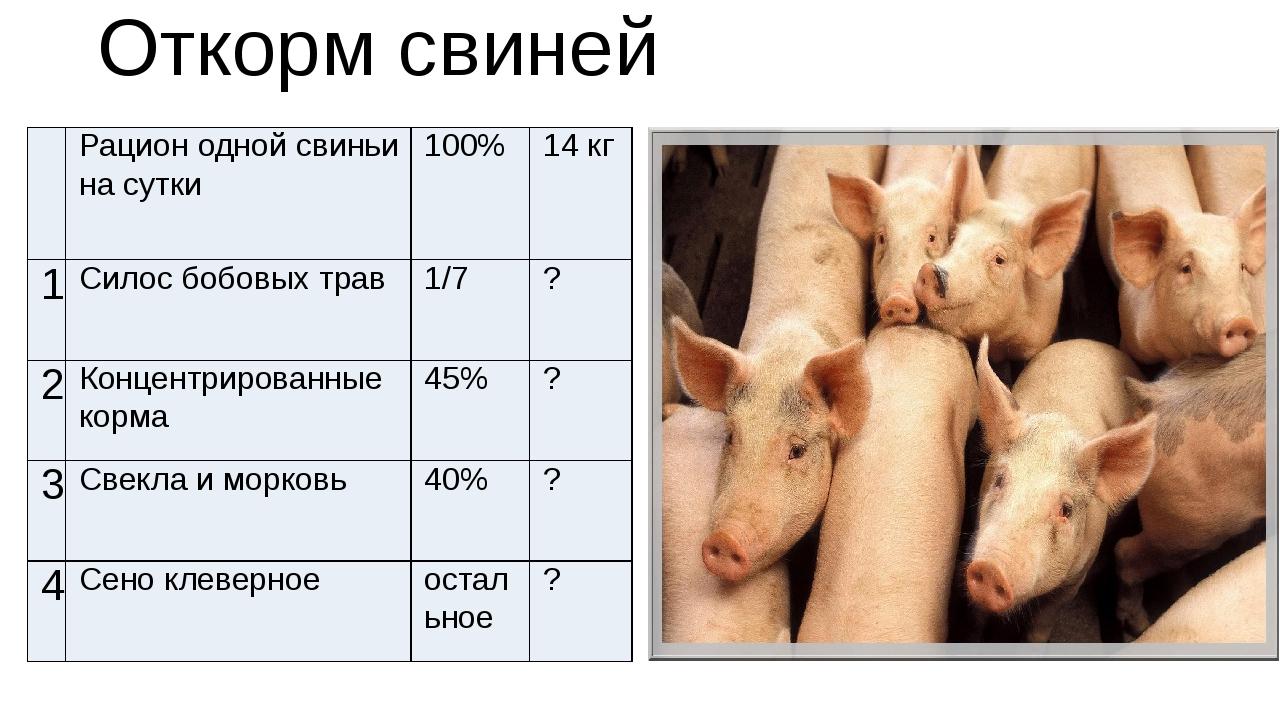 """Разведение свиней: преимущества и недостатки этого бизнеса ао """"витасоль"""""""