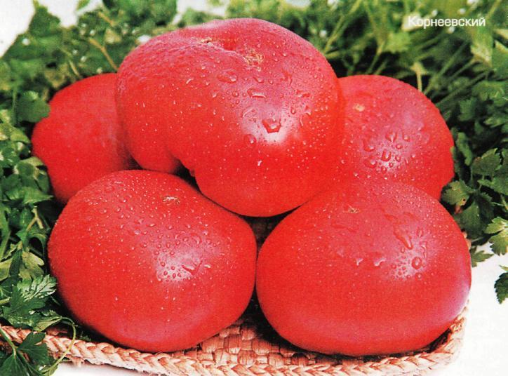 Преимущества и секреты выращивания среднеспелого, устойчивого к болезням и вредителям томата «корнеевский»