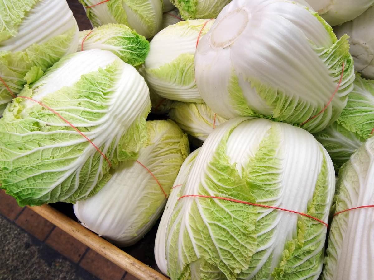 Пекинская капуста на зиму – рецепты маринованной, по-корейски