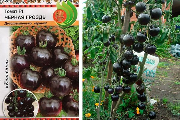 Томат сладкая гроздь — описание сорта с фото