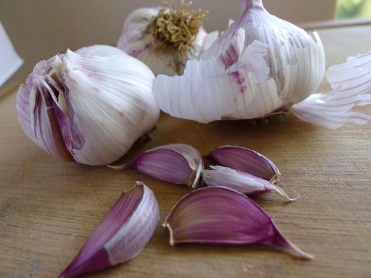 Описание озимого сорта чеснока любаша: урожайность и выращивание