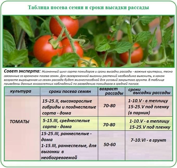 Подкормка рассады томатов – в домашних условиях, народными средствами, чтобы она была крепкой