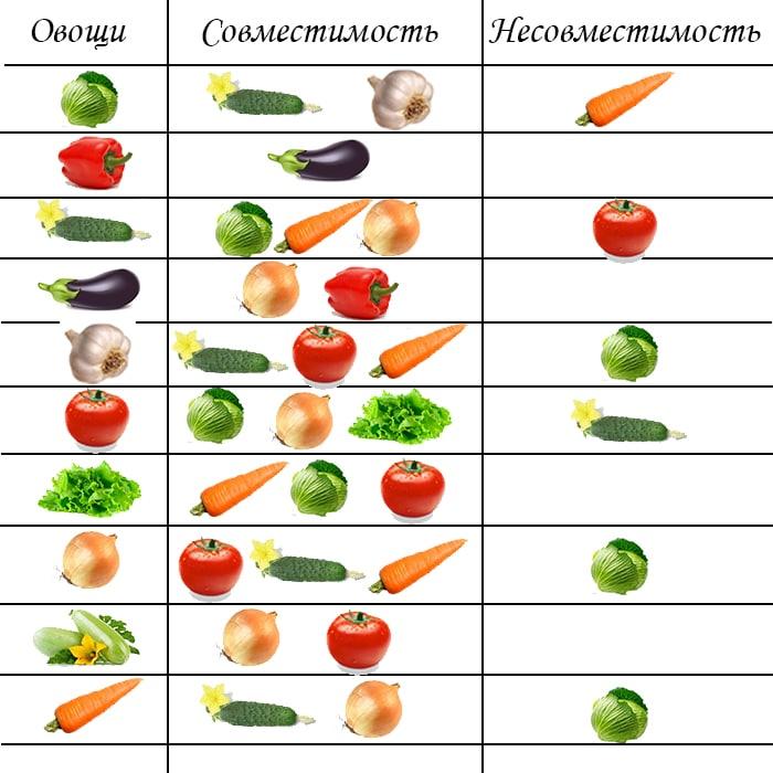 Совместимость овощей в теплице - что с чем можно сажать а что нельзя? | сайт о саде, даче и комнатных растениях.