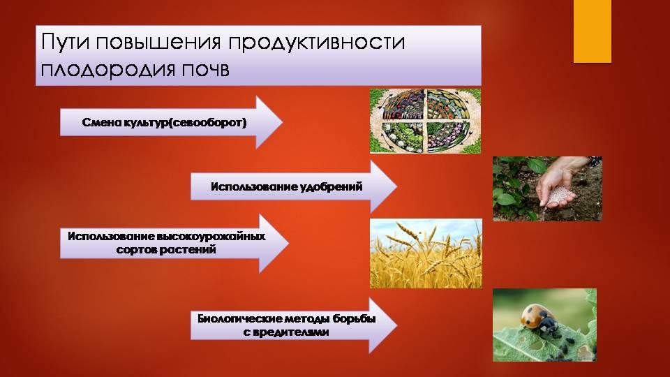 Снижение плодородия почвы – причины и методы восстановления