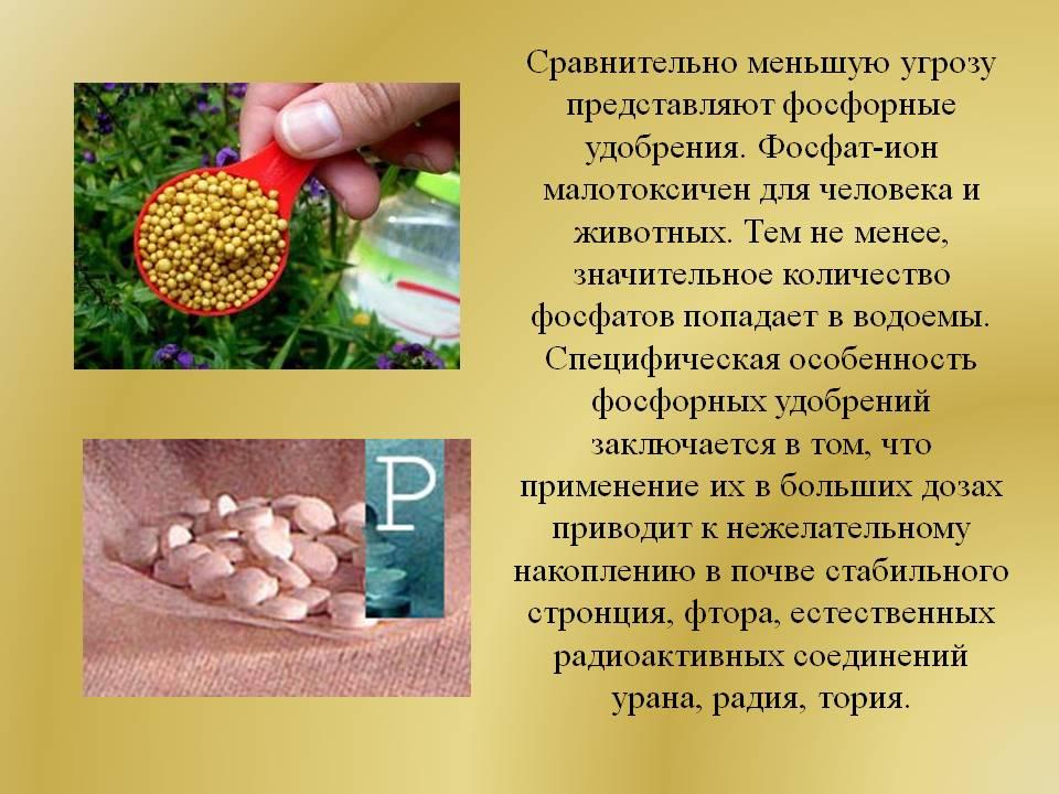 Удобряем томаты с умом: используем фосфорные подкормки