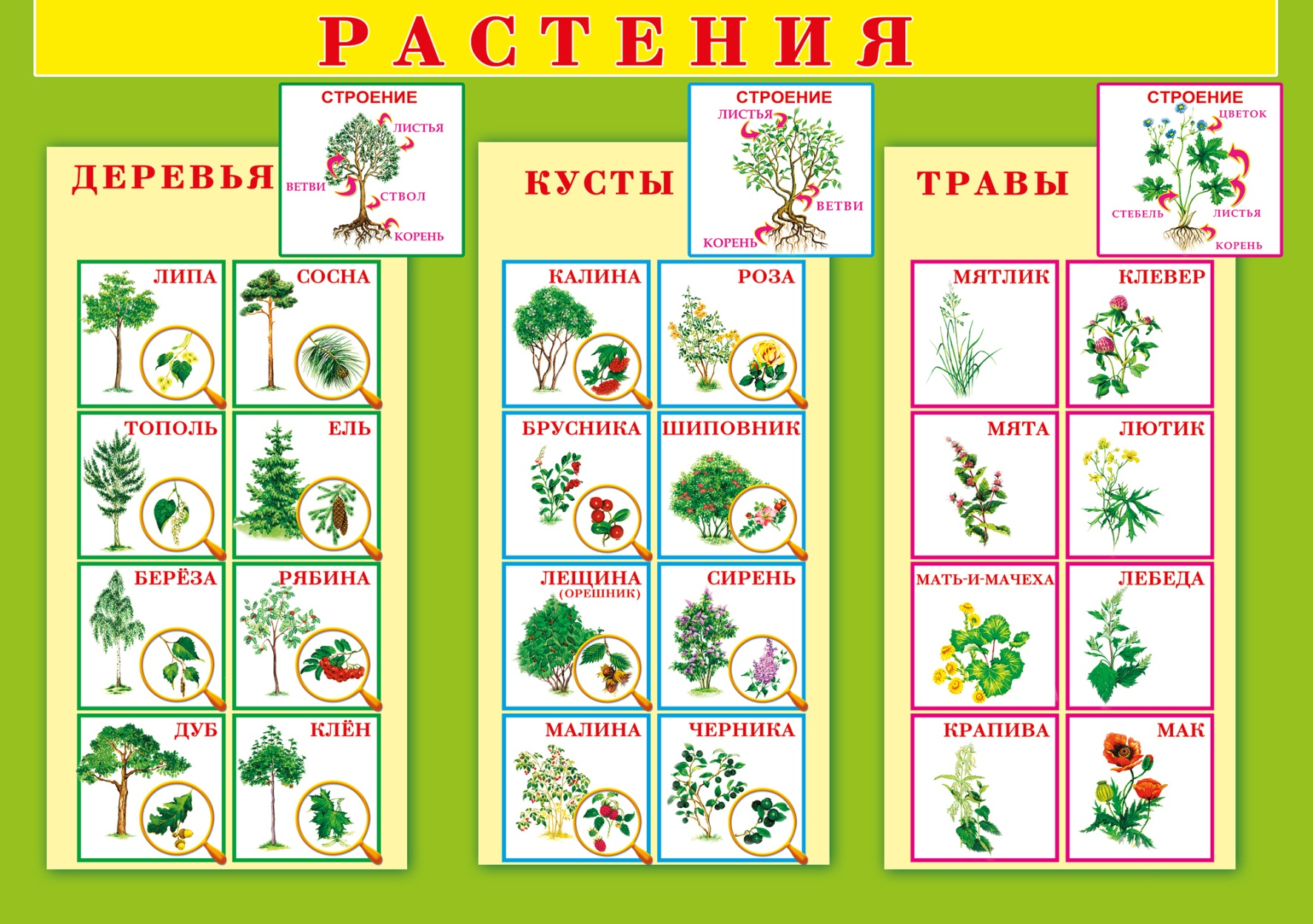 Определить южных цветов по фото: что растет на юге? на supersadovnik.ru
