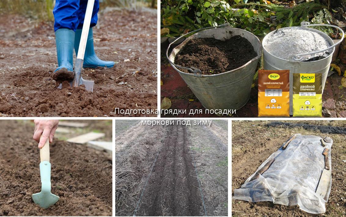 Морковь: сорта для подзимнего посева