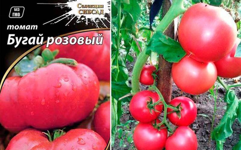 Томат пинк буш: описание и характеристика сорта, фото, отзывы тех, кто сажал, особенности выращивания