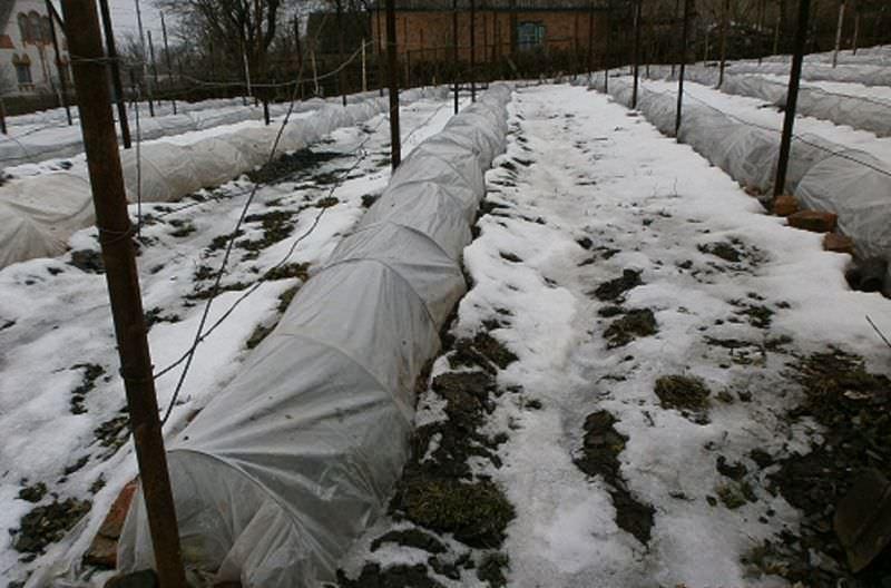 Подготовка сада к зиме осенью: список и полезные советы для садовника