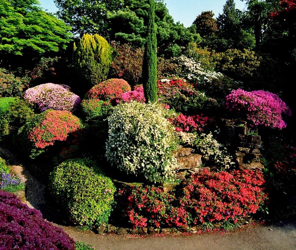 Декоративные растения в ландшафтном дизайне
