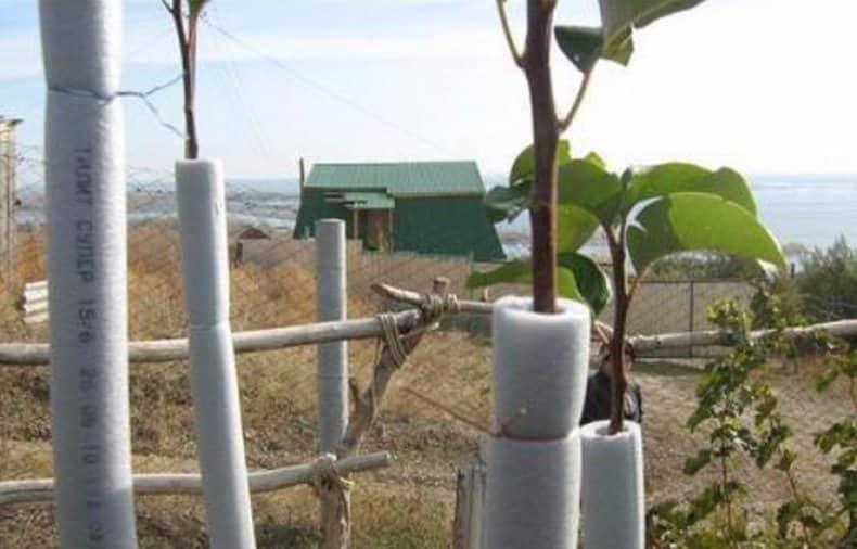 Как правильно посадить яблоню весной в открытый грунт: пошаговая инструкция по посадке саженцев