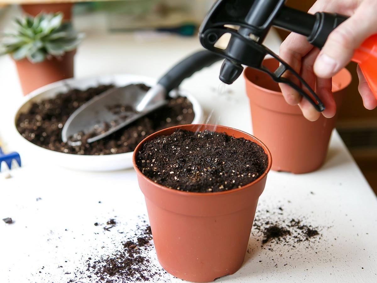 Брусника садовая: посадка, выращивание и уход