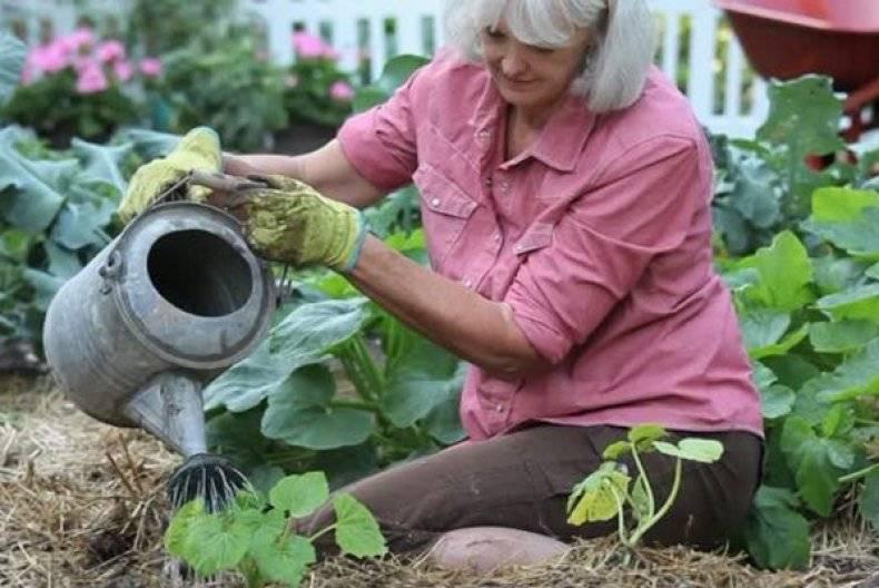 Кабачки: выращивание семенами, посадка, уход   (фото)+отзывы