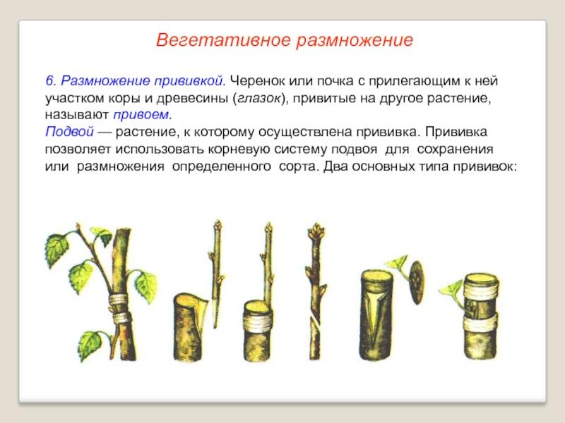 Чем подкормить крыжовник весной и летом для хорошего урожая