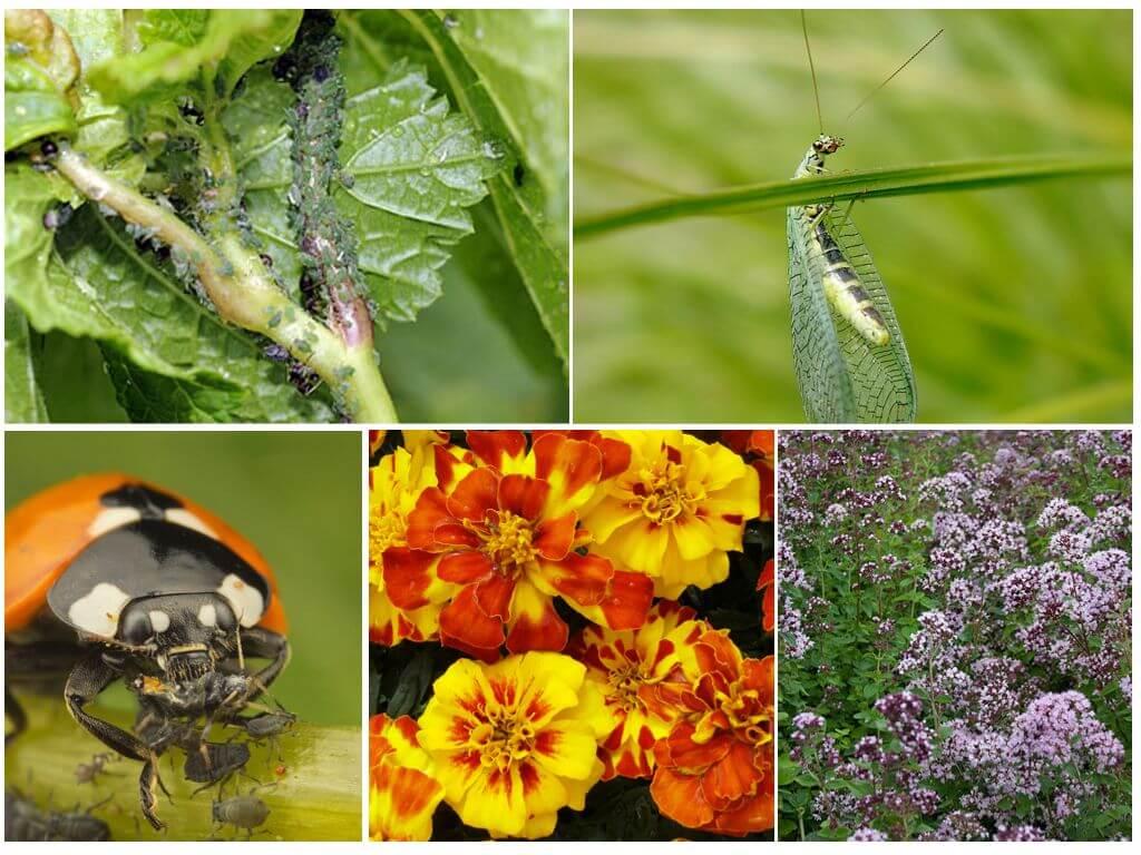 Защита садовых растений: методы и средства борьбы с болезнями, вредителями и сорняками