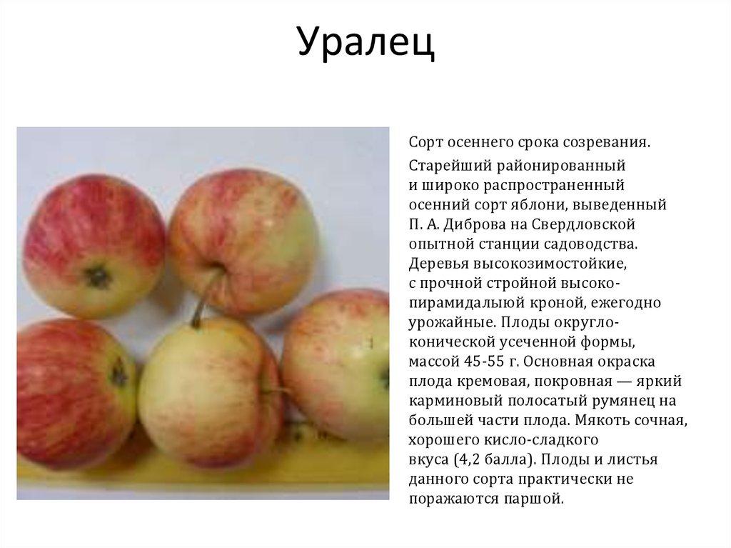 Яблоня горнист: описание, фото, отзывы