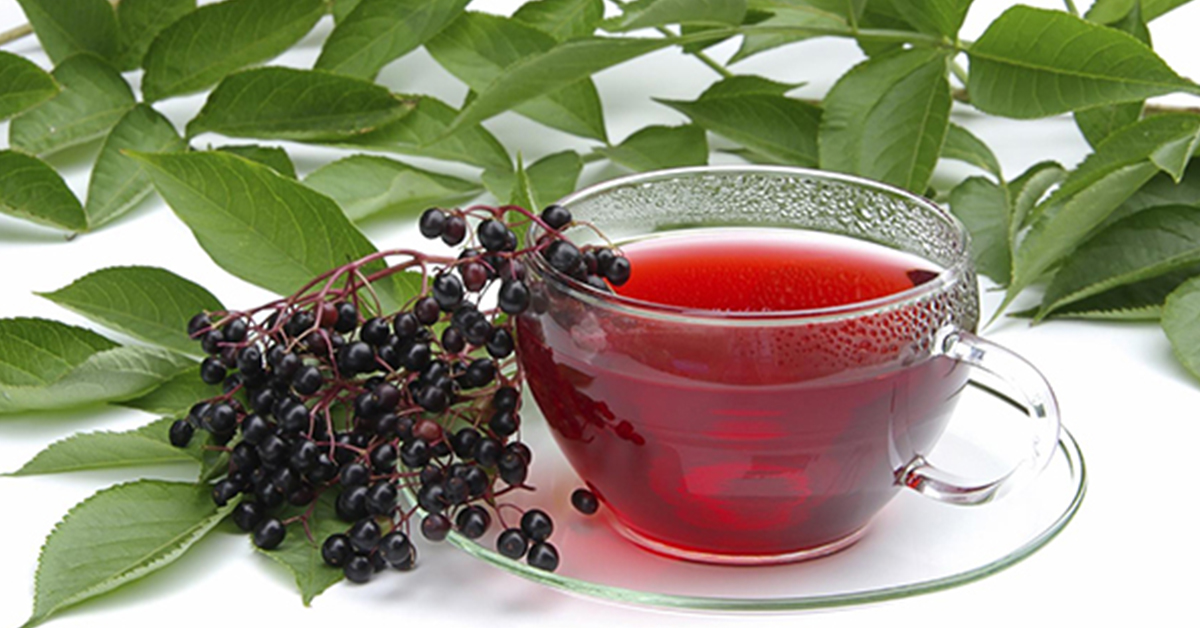 Листья красной и черной смородины: полезные свойства, противопоказания, польза и вред