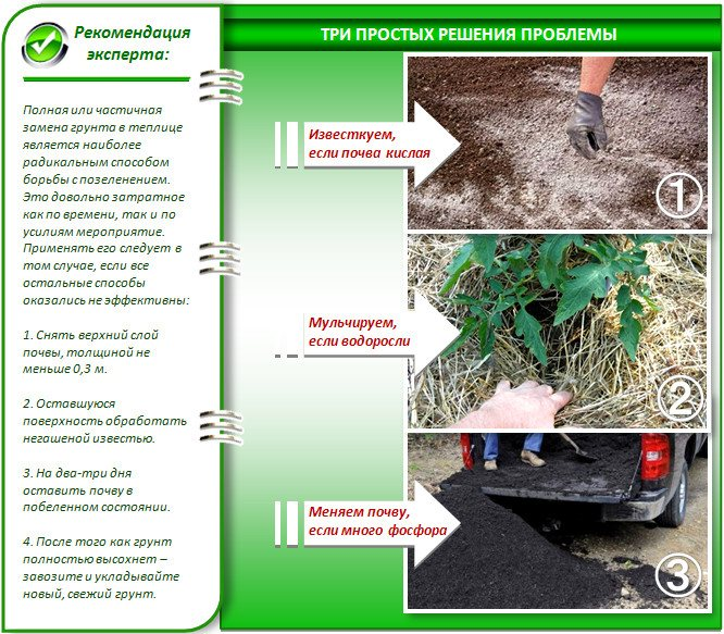 Грунт для теплицы готовим к весенней посадке: обработка теплицы, дезинфекция, удобрения русский фермер