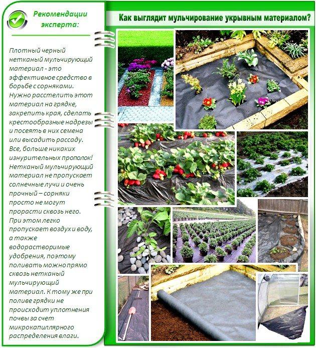 Как выбрать укрывной материал для клубники, правила выращивания, ошибки