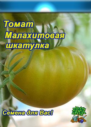 Томат малахитовая шкатулка: описание сорта, отзывы, фото   tomatland.ru