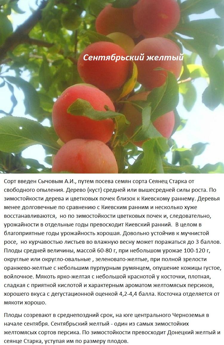 Персик киевский ранний: описание и характеристика сорта