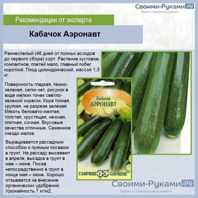 Лучшие сорта кабачков для открытого грунта с фото и описанием на sotkiradosti.ru