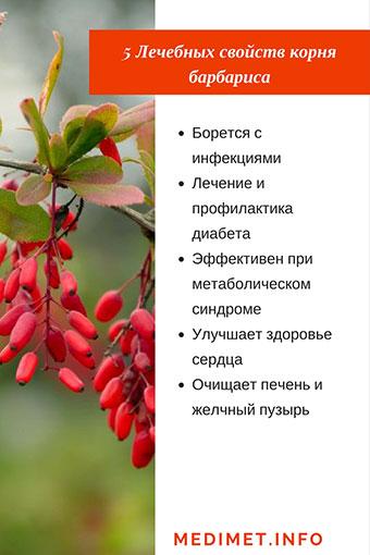 Барбарис: полезные свойства и противопоказания, применение и фото барбариса.