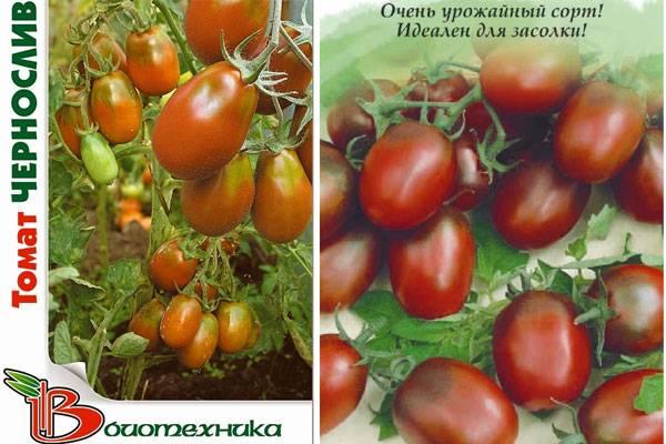 Описание томата Настя-сибирячка, выращивание и отзывы садоводов