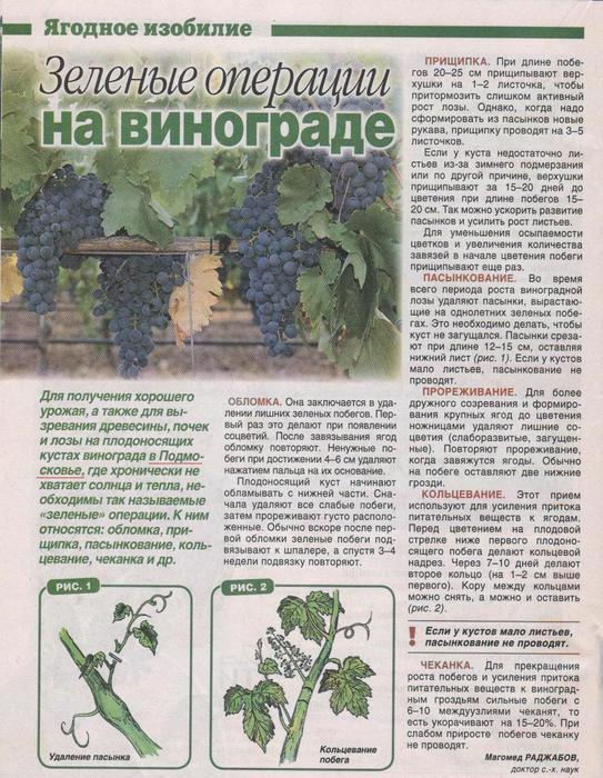 ?гарольд»: сверхранний виноград