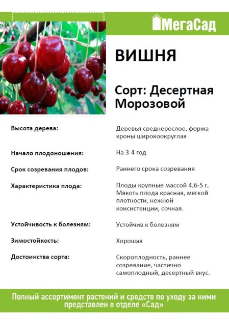 Вишня морозовка: описание сорта, фото плодов, опылители, особенности ухода selo.guru — интернет портал о сельском хозяйстве