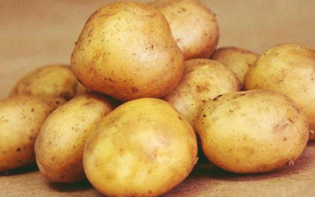 ✅ о картофеле елизавета: описание сорта, характеристики, агротехника - tehnomir32.ru