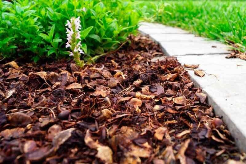 Мульчирование почвы,  какие материалы использовать, как избежать ошибок