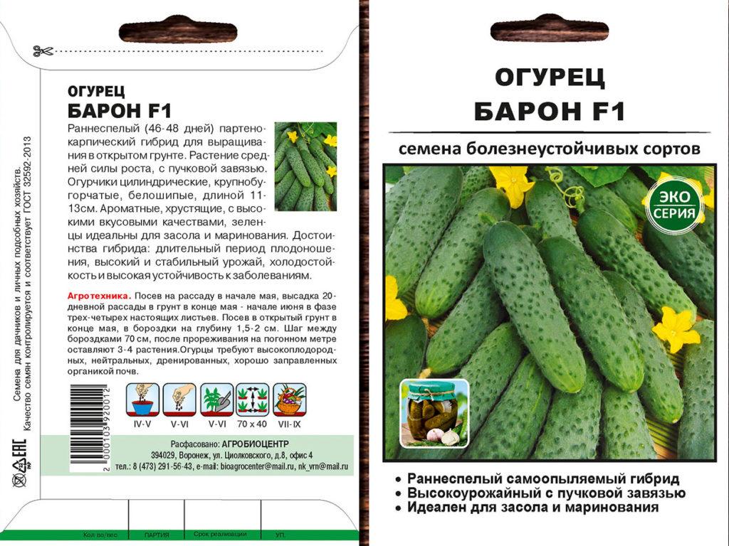 Эколь огурец: описание, выращивание, уход, фото